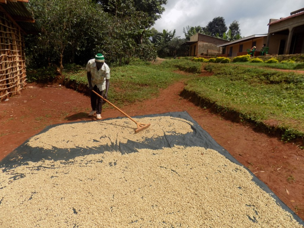 Kabenywa Arbica Coffee Works (5)